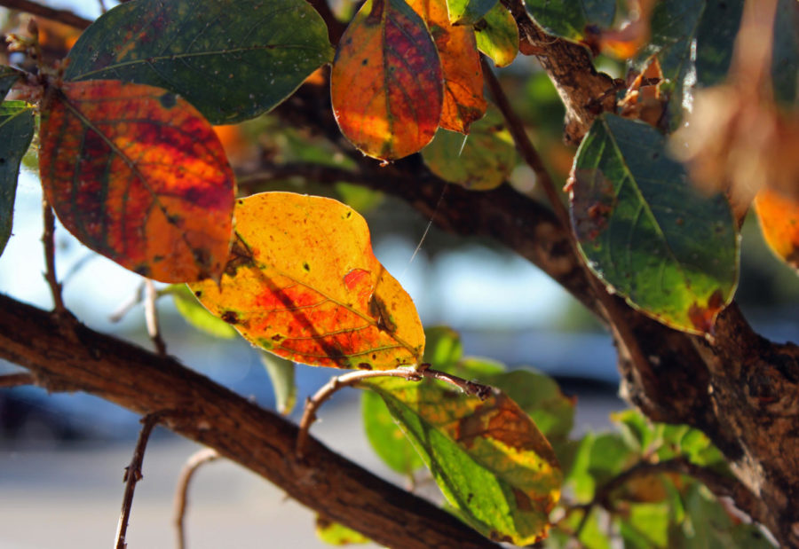A tree outside the gymnasium entrance shows its red and yellow colors. In her attached column, writer Emma Hutchinson provides fun activities for those cooler temperatures.