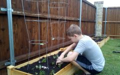 William Norris plants vegetables in his family's new garden. People all over the world are using the global coronavirus pandemic as a motivator to plant gardens, stockpile food and even buy chickens.