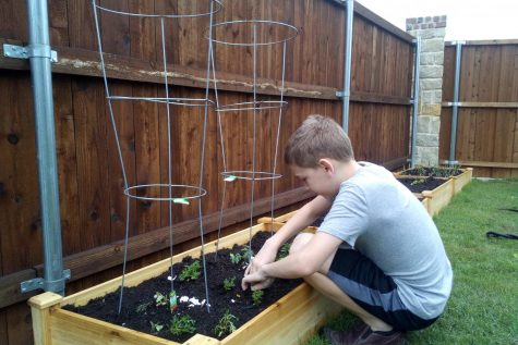 William Norris plants vegetables in his family