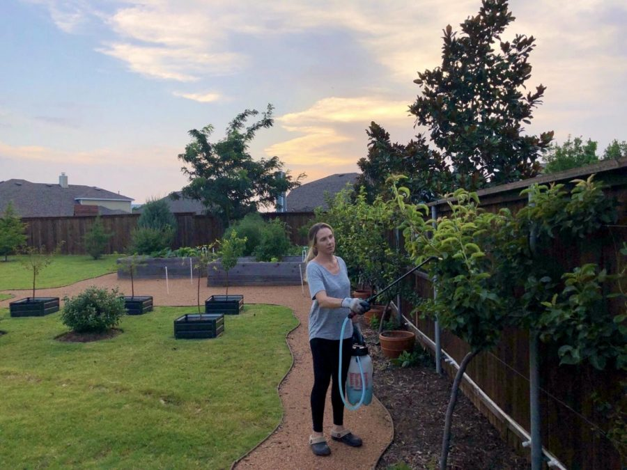 In the quiet of the evening, Tracey George tends to her fruit trees. Quarantine opened up time for moms who, like George, typically have less time for personal hobbies, including gardening.