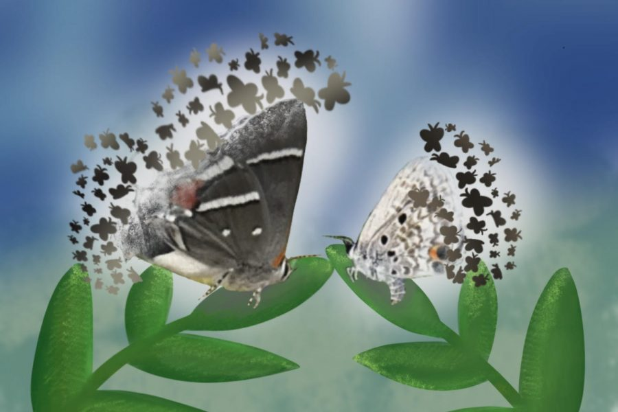 The two butterfly species are pictured in this graphic with an abstract background.