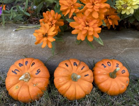 """With what she called """"a festive feeling,"""" photographer Neena Sidhu sets up mini pumpkins with a message. She said she wanted to capture a happy message that may be forgotten during these pandemic times. """"I wanted to show that it will be a interesting fall,"""" Sidhu said, """"no matter the things people can or cannot do."""""""