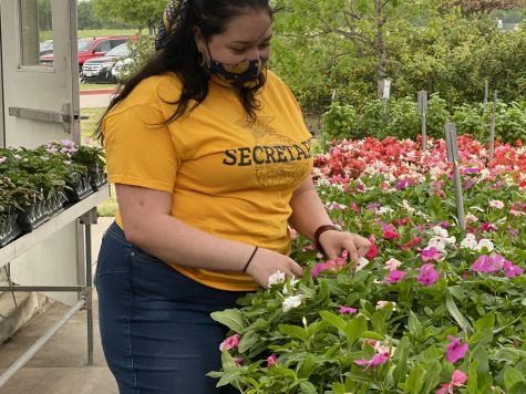 Junior Lauren Helbling prepares flowers for the Prosper Future Farmers of America plant sale. The sale is from 4 p.m. to 6:30 p.m. Friday, April 9, and 8 a.m. to 2 p.m. Saturday, April 10. Only cash or checks are accepted, and all proceeds will benefit the FFA program.