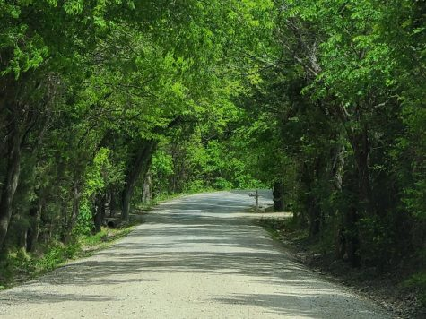 Driving down a dirt road, photographer Christi Norris pauses to capture the newly green trees lining the road. Norris took the photo on the roads behind Erwin Park in Mckinney. These dirt roads line the area surrounding Erwin Park and into other parts of Western Mckinney.